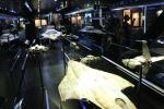 Display with various original starship models used for filming space scenes