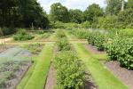 Kleine Felder für die Kinder der königlichen Familie