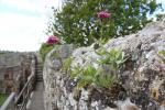 Walls of Carisbrooke Castle