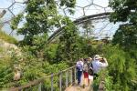 Bridges allow walking through the tree tops in the Biome for tropically humid climate zones